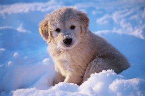 SnowPuppy