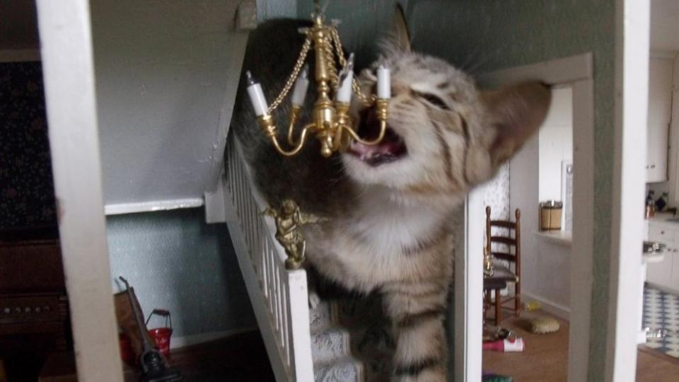 Cat_dollhouse.jpg