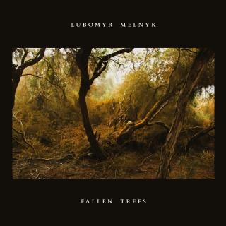 fallen treesr.jpg